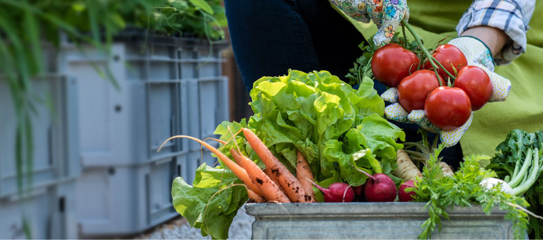 filiere alimentari sostenibili